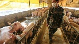 gripe porcina china